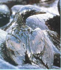 oil-slick-bird
